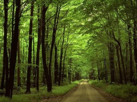 147 га Беличанского леса отдадут для реализации проекта «Bionic Hill»
