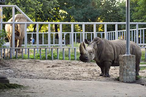 Возле столичного зоопарка вырубают деревья и готовят стройплощадку